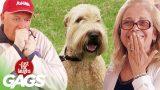 Best of Animal Pranks Vol. 4   Just For Laughs Compilation