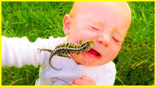 Funniest Moments Baby Meet Animals – Hilarious Fails